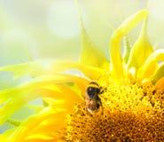 Bij op de bloem in de zonnebloem Royalty-vrije Stock Afbeeldingen