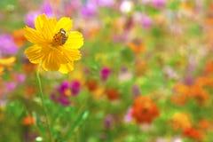 Bij op de gele bloem stock afbeeldingen