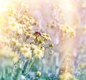 Bij op de lentebloemen Royalty-vrije Stock Afbeeldingen
