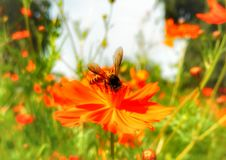 Bij op een bloem Stock Foto's