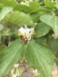 Bij op een Bloem in de lente stock afbeeldingen