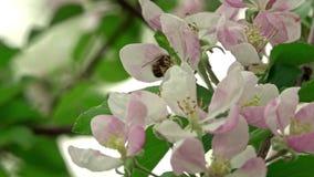 Bij op een bloem stock video