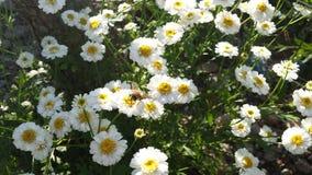 Bij op een bloem wordt neergestreken die royalty-vrije stock foto's