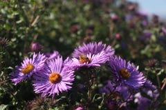 Bij op een bloembed Stock Foto's