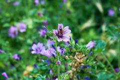 Bij op purple stock foto's