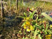 Bij in wildflower royalty-vrije stock fotografie