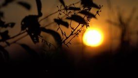 Bij zonsondergang het overzicht van een boomtak Stock Afbeeldingen