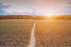 Bij zonsopgang verlicht ontsproten gebied, laag, zoet, jong graan Stock Afbeeldingen