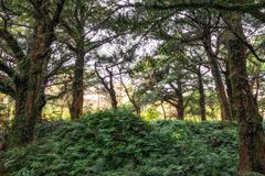 Bijarim boslandschap royalty-vrije stock foto's
