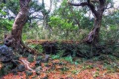 Bijarim boslandschap royalty-vrije stock fotografie