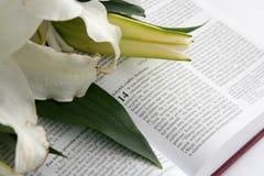 Bijbel Stock Foto's