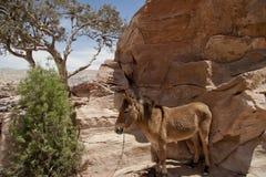 Bijbelse scène met ezel Stock Foto
