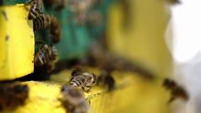 bijen stock footage