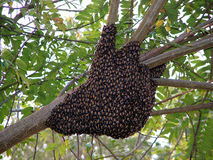 Bijen Stock Afbeelding