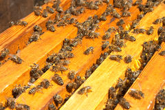 Bijen stock foto's