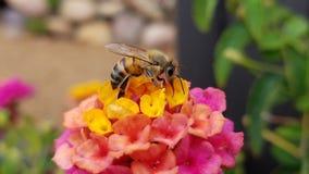 Bijen aardige mens stock foto