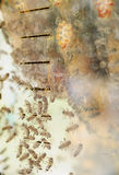 Bijen achter het glas Stock Fotografie