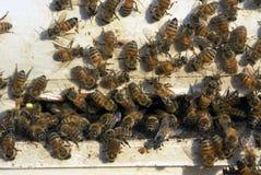 Bijen bij bijenkorf Royalty-vrije Stock Afbeeldingen
