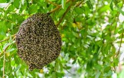 Bijen bij honingraat stock afbeeldingen
