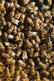 Bijen in bijenkorf Stock Foto's