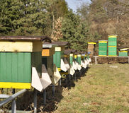 Bijen in bijenkorven Stock Afbeelding
