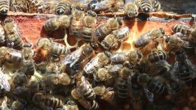 Bijen binnen bijenkorf Stock Foto's