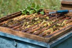 Bijen in de bijenkorf stock foto's