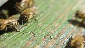 Bijen dichtbij een bijenkorfclose-up stock video