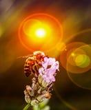 Bijen dichte omhooggaand Royalty-vrije Stock Afbeelding