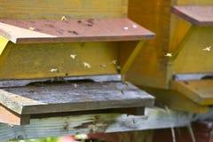 Bijen die aan daar huis vliegen Stock Foto