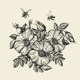 Bijen die aan de bloem vliegen Hand getrokken imkerij Vector illustratie stock illustratie