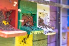 Bijen die aan Kleurrijke bijenkorf vliegen royalty-vrije stock afbeeldingen