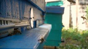 Bijen die binnen en uit bijenkorf vliegen stock video