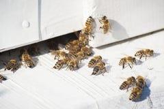 Bijen die de bijenkorf ingaan stock afbeeldingen