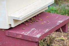Bijen die in en uit een bijenkorf vliegen Stock Fotografie