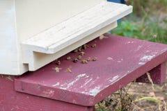 Bijen die in en uit een bijenkorf vliegen Stock Afbeelding
