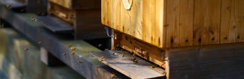 Bijen die houten bijenkorf op een zonnige dag ingaan stock afbeeldingen