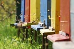 Bijen die kleurrijke bijenkorven ingaan Stock Fotografie
