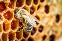 Bijen in een bijenkorf op honingraat