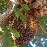Bijen en bijenkorf stock foto's