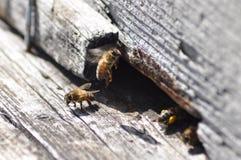 Bijen en bijenkorf Stock Foto