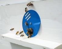 Bijen en bijenkorf Royalty-vrije Stock Afbeelding
