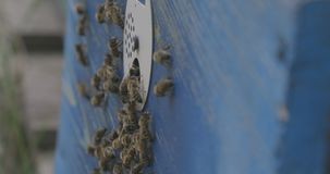 Bijen en bijenstal van één kant stock footage