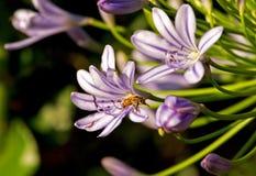 Bijen en bloemen royalty-vrije stock foto's