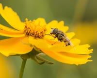 Bijen en bloemen Stock Foto's