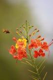 Bijen en bloemen Stock Afbeeldingen