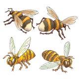 Bijen en hommels Royalty-vrije Stock Foto's