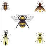 Bijen en Wespen Stock Foto