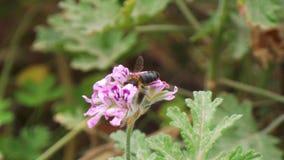 Bijen en zijn rijkdom van voordelen Stock Afbeeldingen