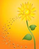 Bijen en zonnebloem Stock Afbeeldingen